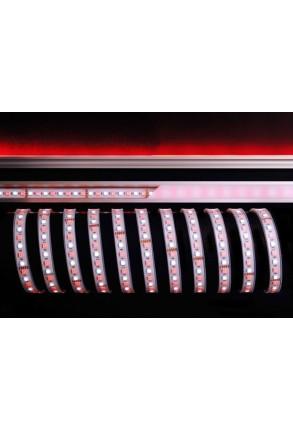Bandă LED 5050 6200K+RGB 115W 24 V Silicon